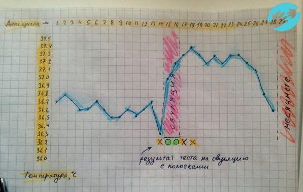 Ректальная температура за день до месячных. Какой должна быть норма температуры в прямой кишке? Температура тела в прямой кишке